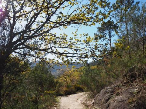ポルト散歩(25)Peneda-Gerês 国立公園 ローマ時代のマイルストーン_c0212604_221016.jpg