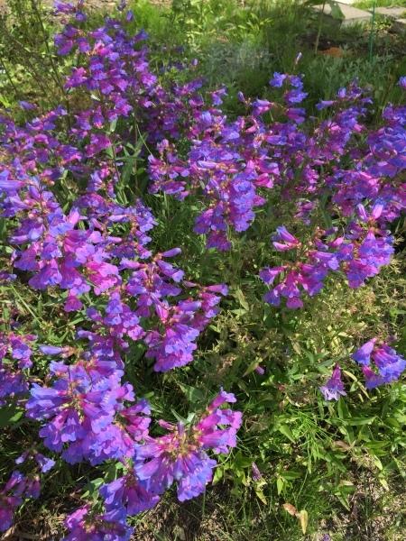 ヘブンリーブルーの咲く朝に_f0377507_14563424.jpeg