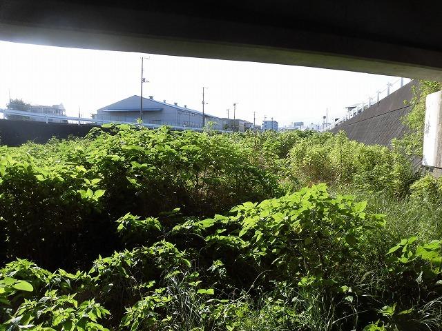 最後はバテバテ! 梅雨明けを思わせる暑さの中で「小潤井川 友の会」の草刈り清掃_f0141310_06430315.jpg