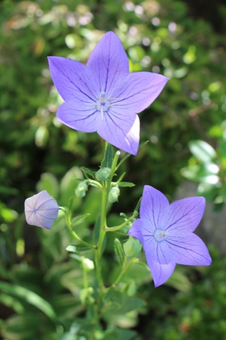 夏の庭は_d0150720_13360682.jpg