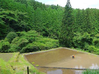 米作りの挑戦(2020年) 昨年より1週間早く苗床を作りました!(前編:米作りに取り組むわけとこの地の環境)_a0254656_16452294.jpg