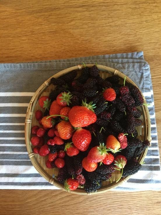 収穫祭を迎えたわが家の庭_c0274374_23580853.jpeg