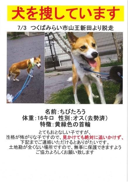 【解決・迷子】7/3 つくばみらい市より行方不明_f0242002_09173671.jpg