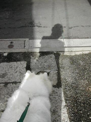お散歩写真はじめて撮ってみた_c0062832_20223383.jpg