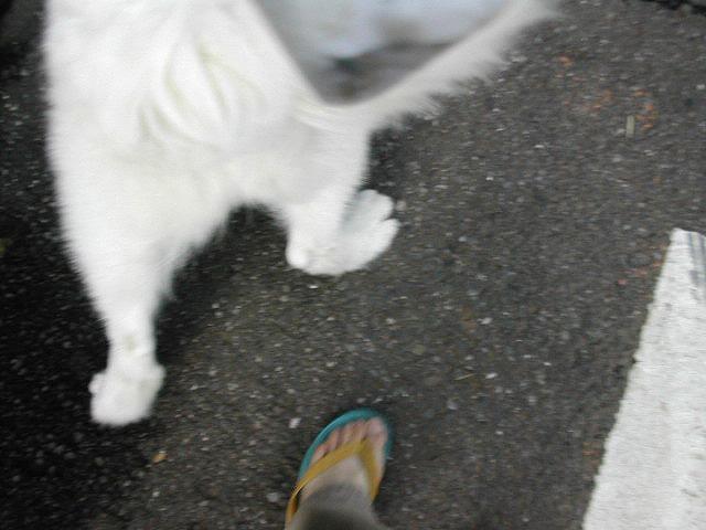 お散歩写真はじめて撮ってみた_c0062832_20240812.jpg