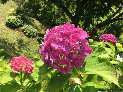 季節の花のあるヘアサロン_e0145332_09404532.jpg