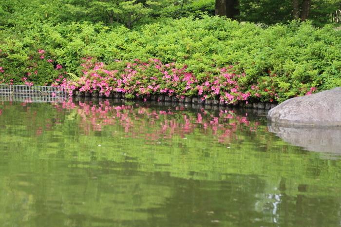 昭和記念公園散策♪日本庭園のハナショウブ 3_d0152261_13283999.jpg