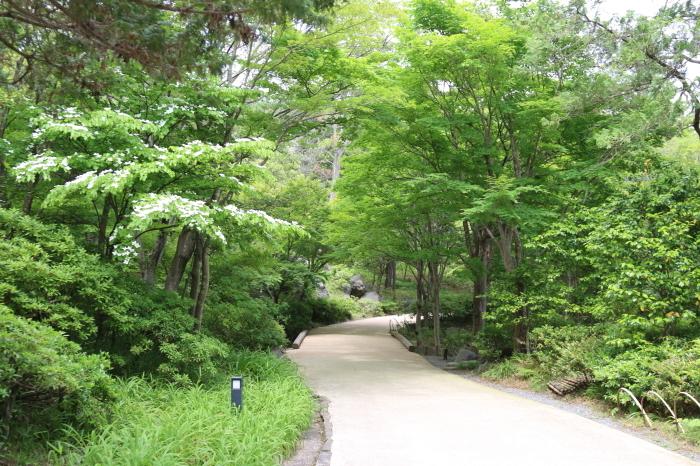 昭和記念公園散策♪日本庭園のハナショウブ 3_d0152261_13304901.jpg