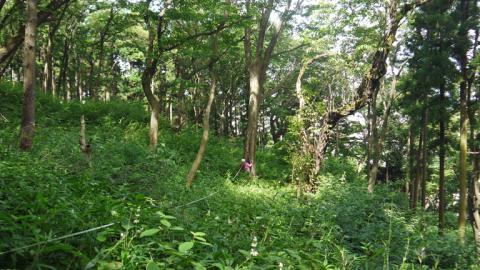 まちむら交流きこうの里山林整備交付金の採択内定6・14_c0014967_19581203.jpg
