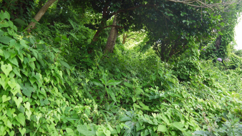まちむら交流きこうの里山林整備交付金の採択内定6・14_c0014967_20011935.jpg