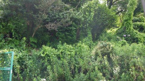 まちむら交流きこうの里山林整備交付金の採択内定6・14_c0014967_20015900.jpg