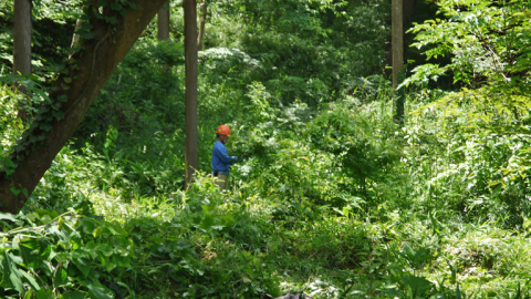 まちむら交流きこうの里山林整備交付金の採択内定6・14_c0014967_20031251.jpg