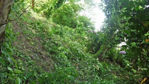 まちむら交流きこうの里山林整備交付金の採択内定6・14_c0014967_20033551.jpg