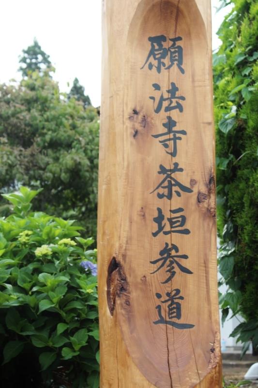 江戸時代 宇治から種を 持ち帰り 参道脇に 植えたんだって_b0220318_04122668.jpg