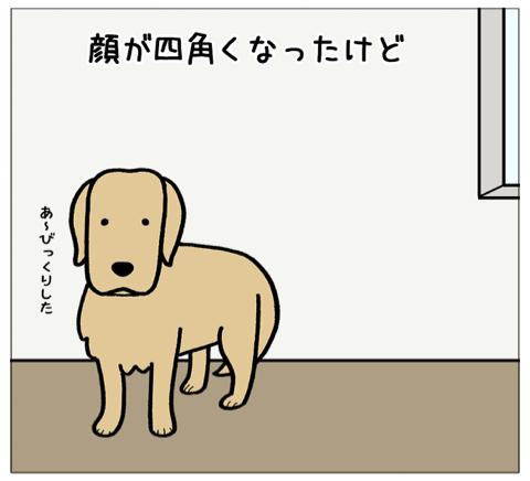 エフ漫画『顔が四角くなる感じ(コメの場合)』_c0033759_19591842.jpg