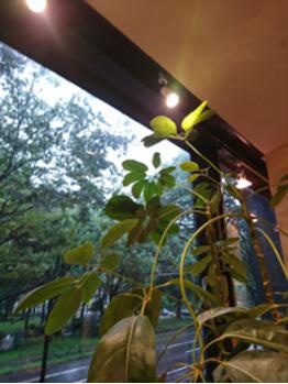 雨です。。。でも、チャンスです!!_a0272765_09022263.jpg
