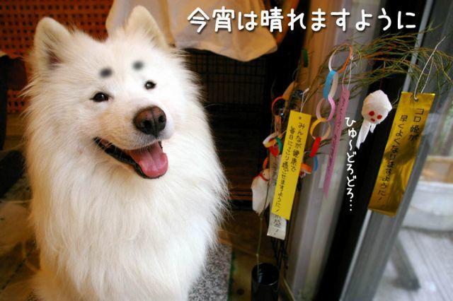 七夕_c0062832_15551767.jpg