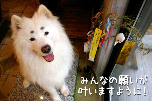 七夕_c0062832_15551792.jpg