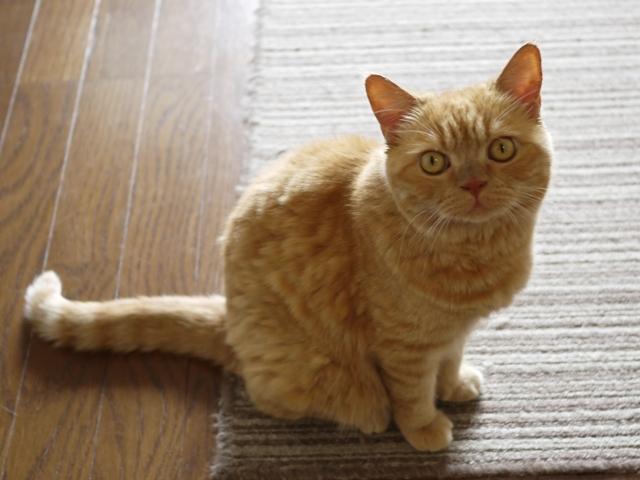 猫のお留守番 みかんちゃん編。_a0143140_22054813.jpg