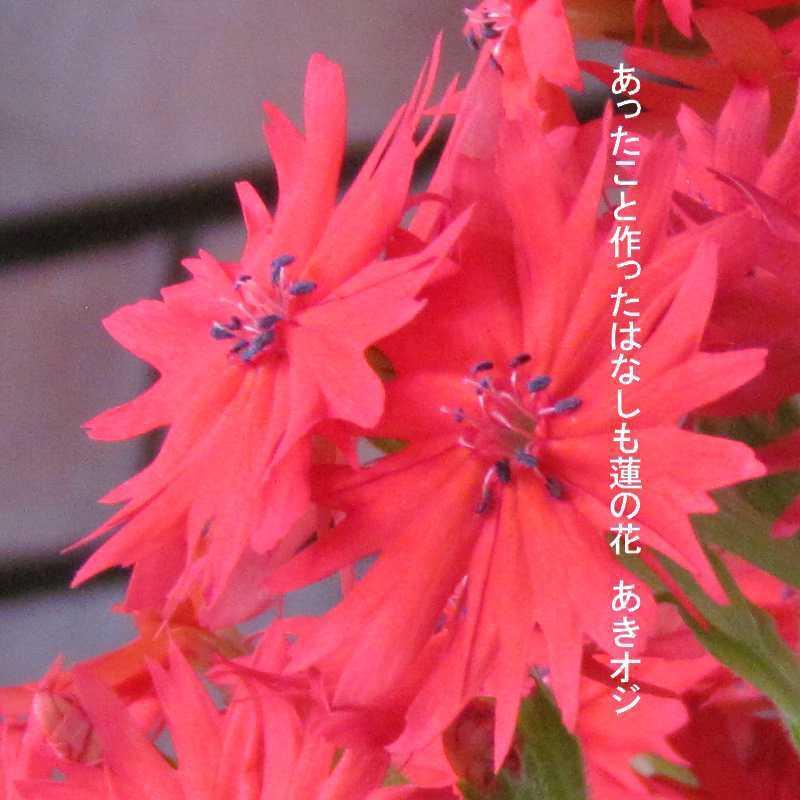 f0117041_05572420.jpg