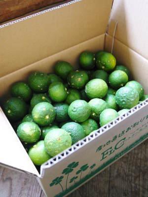 香り高き柚子(ゆず) 着果の様子を現地取材(2020) 今年もまずは青柚子を9月中旬からの出荷予定です!_a0254656_12123525.jpg