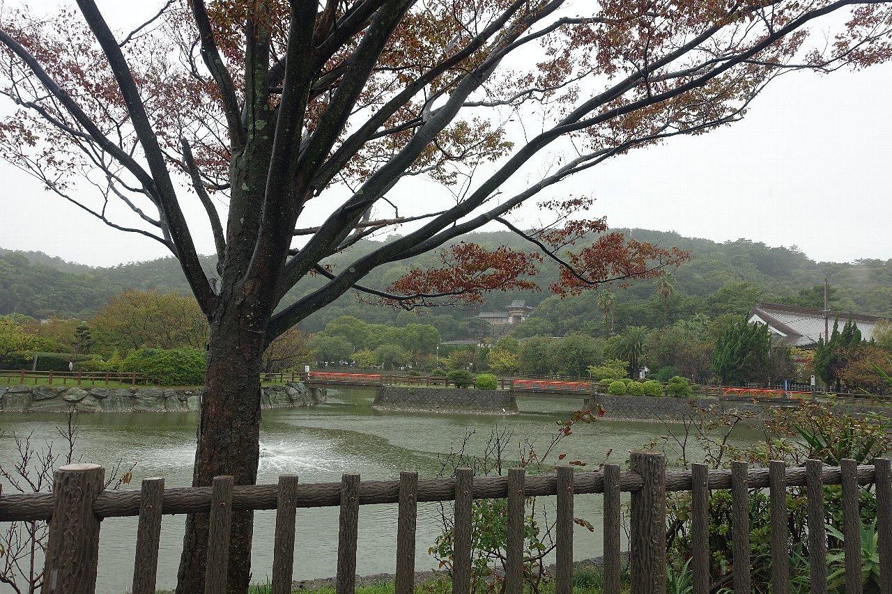 和歌山市の御手洗池公園_c0112559_08143226.jpg
