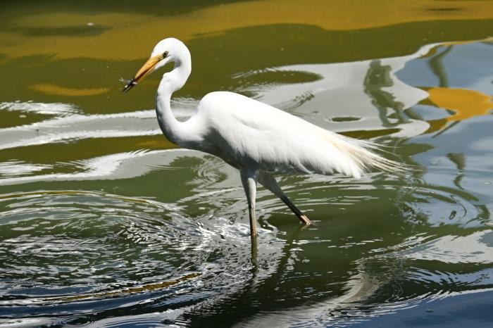 千波湖の鳥さんたち①_a0127090_12190360.jpg