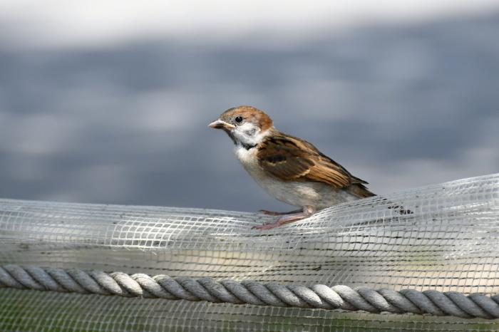 千波湖の鳥さんたち①_a0127090_12195092.jpg