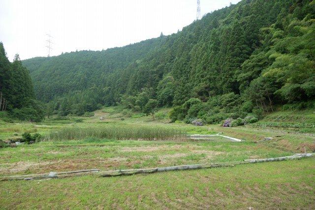 森町の半夏生(ハンゲショウ)_a0023397_08200618.jpg