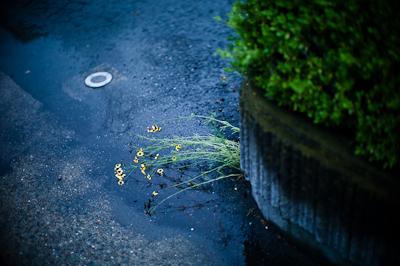 180708 flower_b0129659_618823.jpg