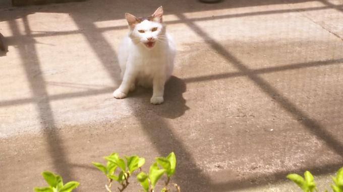 「ネコ歩き」を見ながら♪_f0374160_21440843.jpg