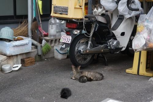 猫温泉のマックロちゃん_c0193077_14471189.jpg