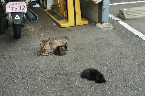 猫温泉のマックロちゃん_c0193077_14473215.jpg