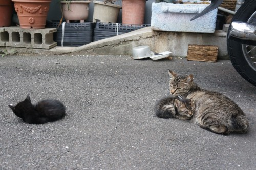 猫温泉のマックロちゃん_c0193077_14481931.jpg