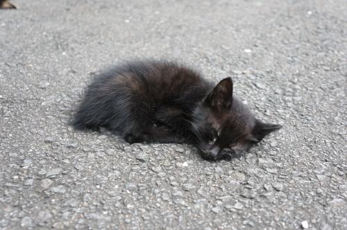 猫温泉のマックロちゃん_c0193077_14485410.jpg