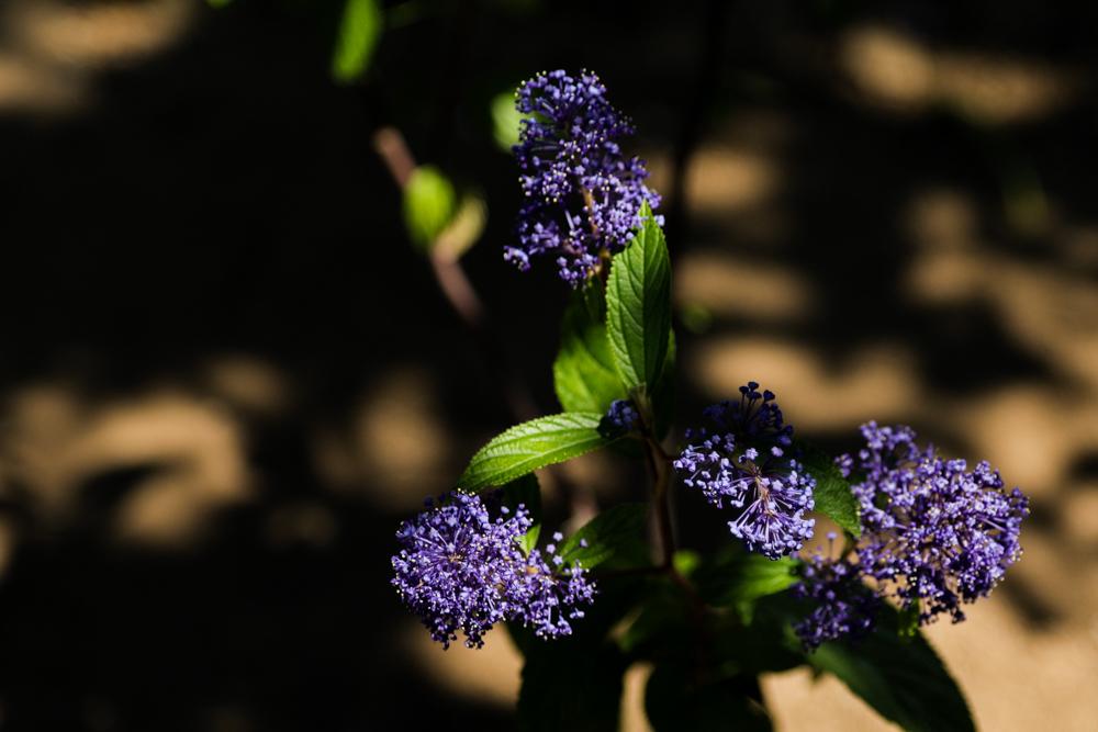 紫色_c0252695_09573856.jpg