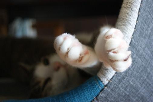 9匹のネコのミニタペストリー_a0122205_12323235.jpg