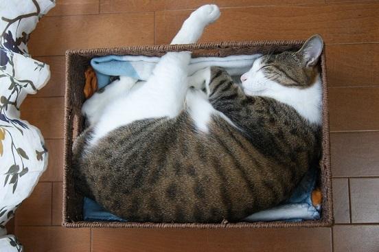 9匹のネコのミニタペストリー_a0122205_12323989.jpg