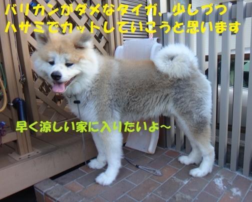 f0121712_13591113.jpg