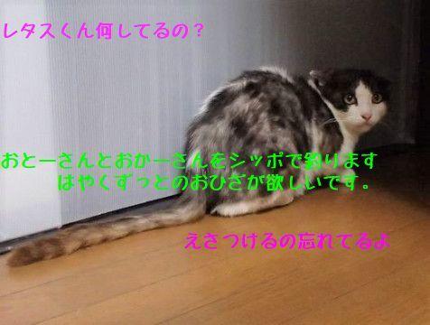d0393041_22291980.jpg