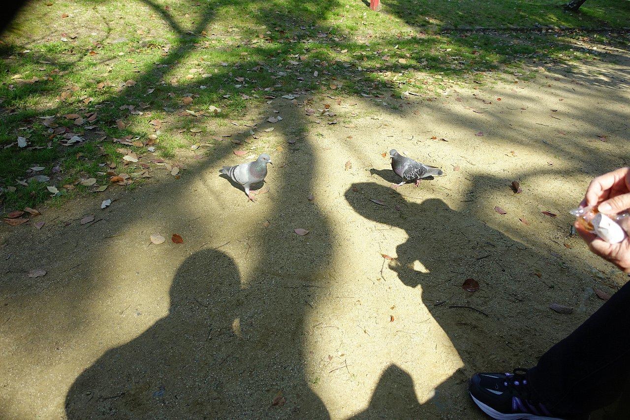 和歌山城公園 和歌山城_c0112559_08505469.jpg