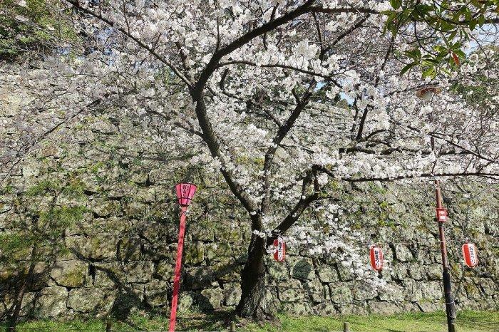 和歌山城公園 和歌山城_c0112559_08512223.jpg