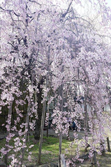 和歌山城公園 和歌山城_c0112559_08520564.jpg