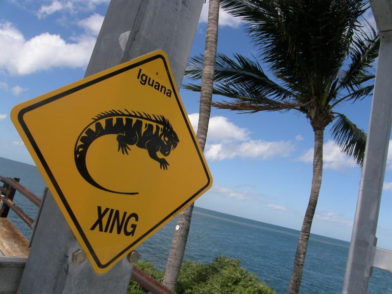 2012.11 カリブ海 The 2nd day_a0013160_08083622.jpg
