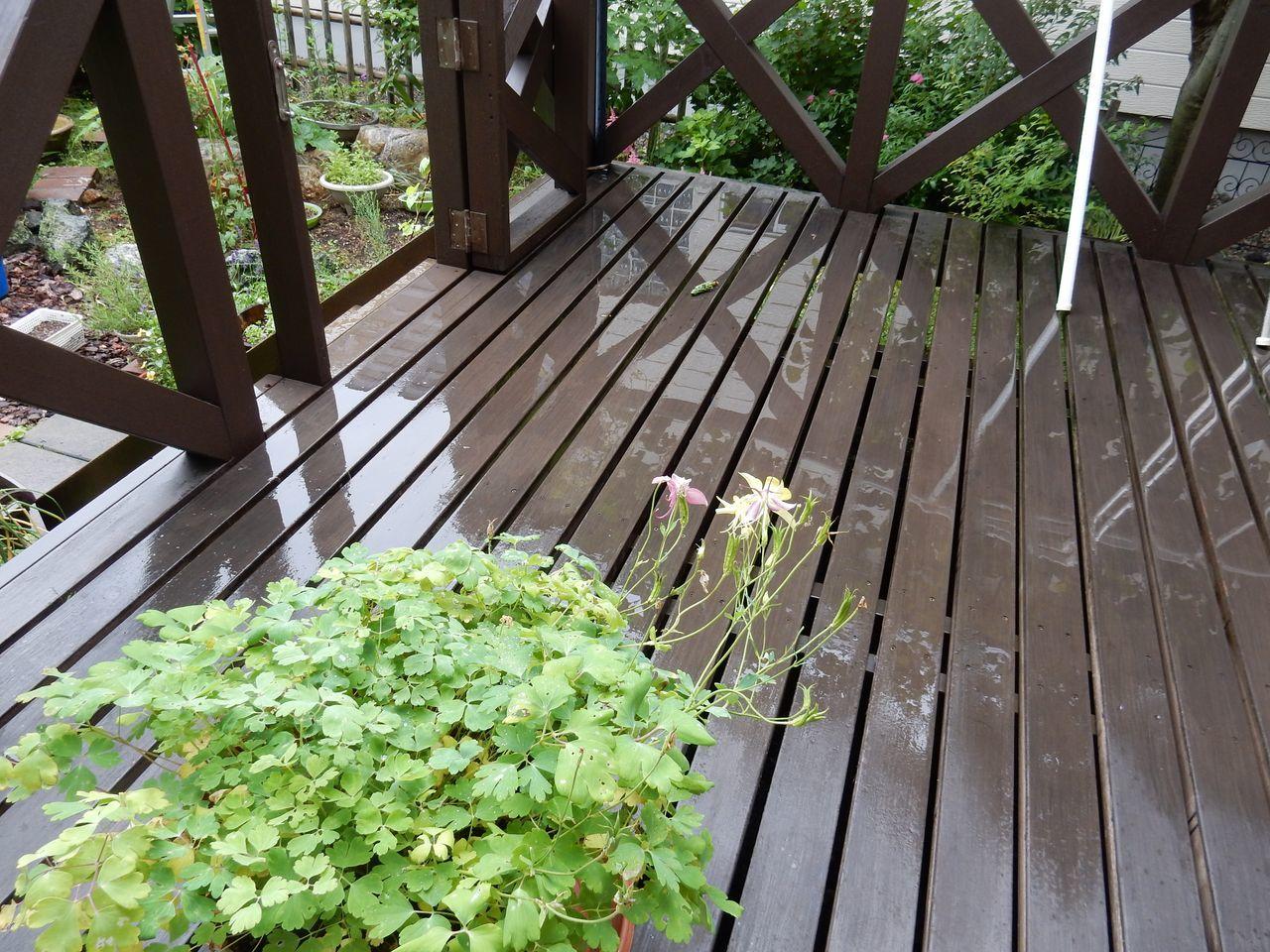 しとしと降る梅雨の戻り_c0025115_20401773.jpg