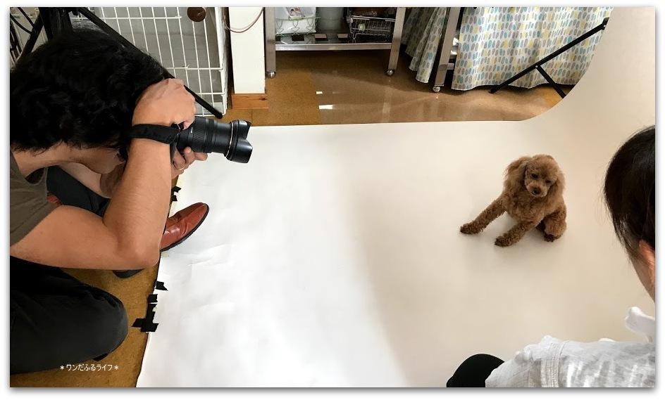 *初! 犬撮影会 7月8日*_d0317115_20320375.jpg