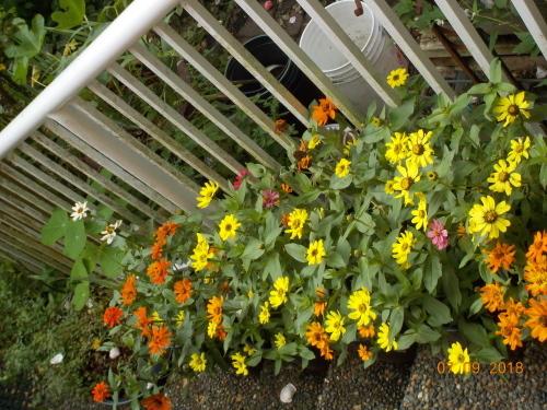 2018 年七月の庭の風景_a0173527_10563437.jpg