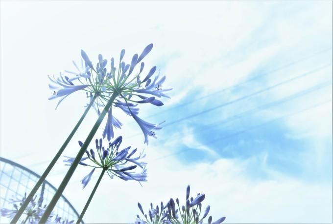 6月の青い花_e0348754_07565076.jpg