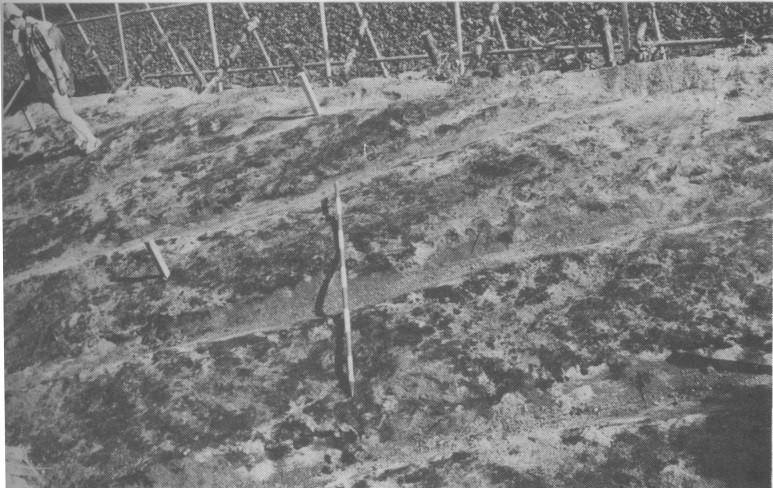 コラムリレー(第108回) 鳥崎遺跡について_f0228071_18300898.jpg