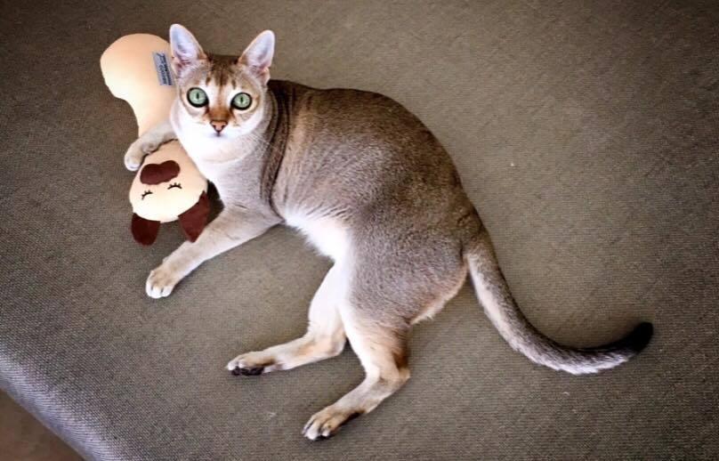 ㊗愛猫ディアモン君のBirthdey❣️_a0138976_16464935.jpg
